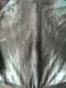 Arkham City Catwoman Costume 3D Printed Suit